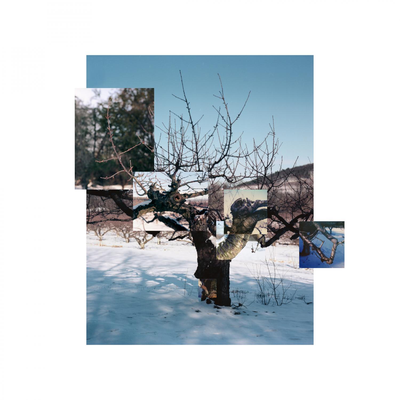 Cherry Tree in Winter