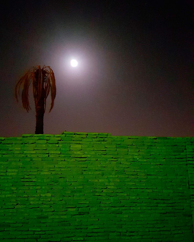 #palmtree #yazd