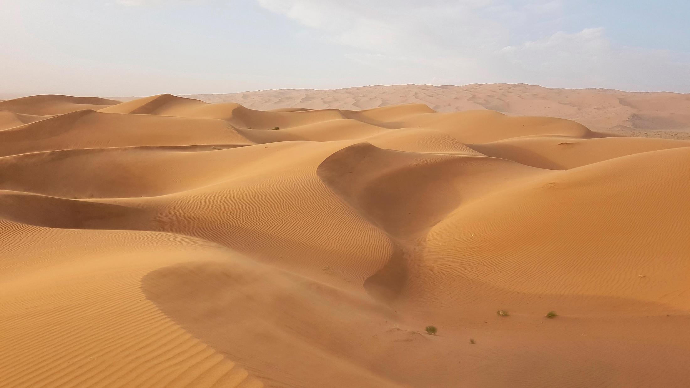 #mesr #desert
