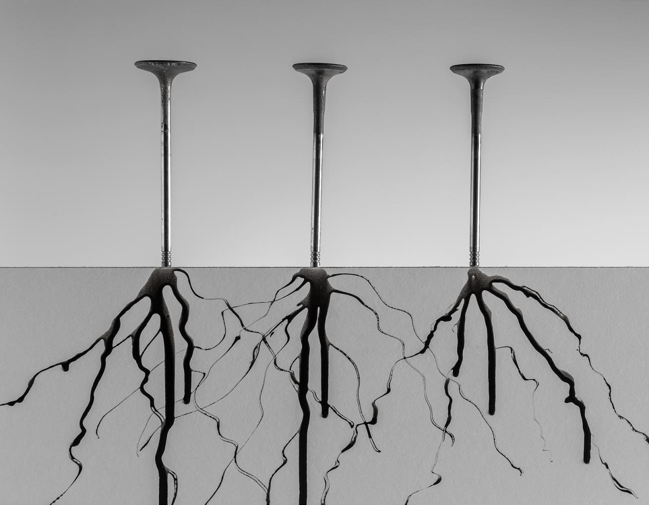 Roots / Raíces Habitat II #8
