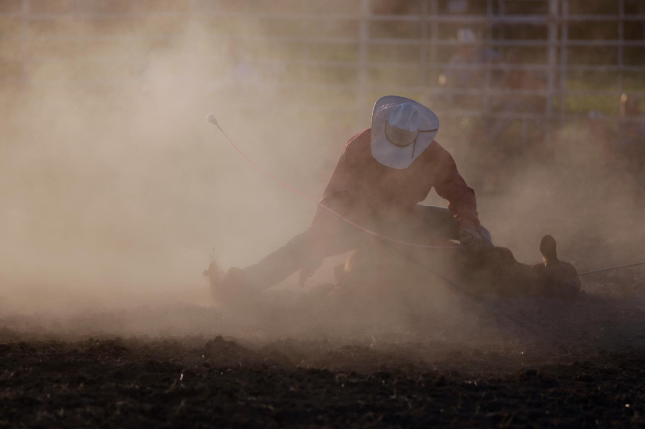 Dust flies as a cowboy hog ties a calf during the annual Saline County rodeo on July 13, 2019 in Marshall, Missouri.