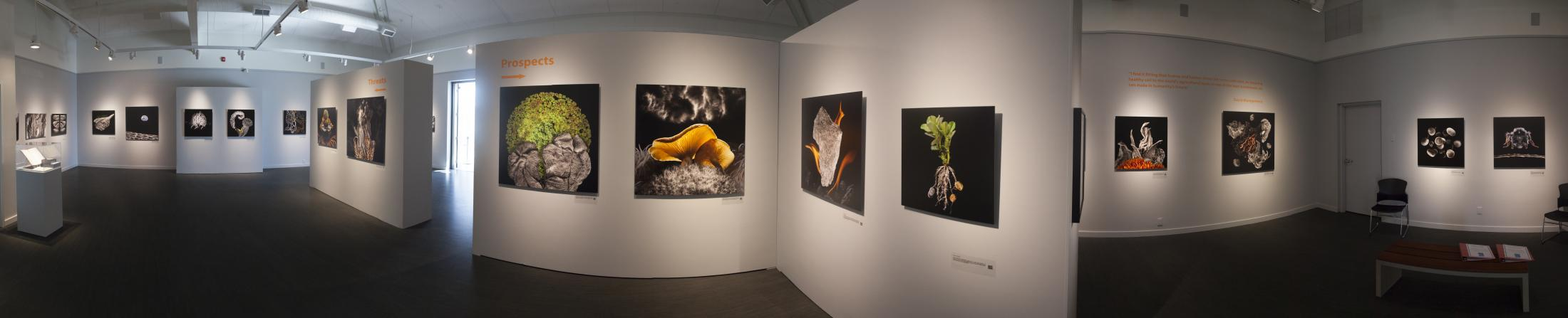 View Food for Thought Exhibition Images