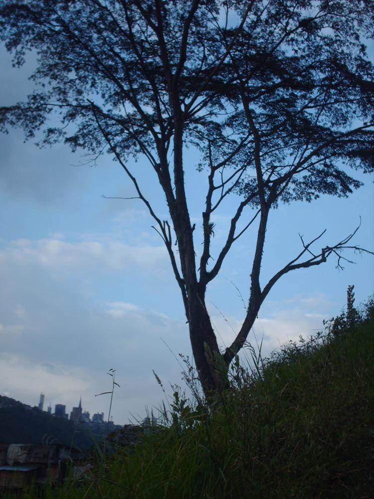 En este árbol yo tenía un columpio. Pasaba muchas horas acá, pensaba en mi vida, en mi pasado, en mis cosas y luego regresaba más tranquilo a casa. Me lo quitaron porque un chico no se sujetó bien y se cayó sobre una pringamosa (ortigas).