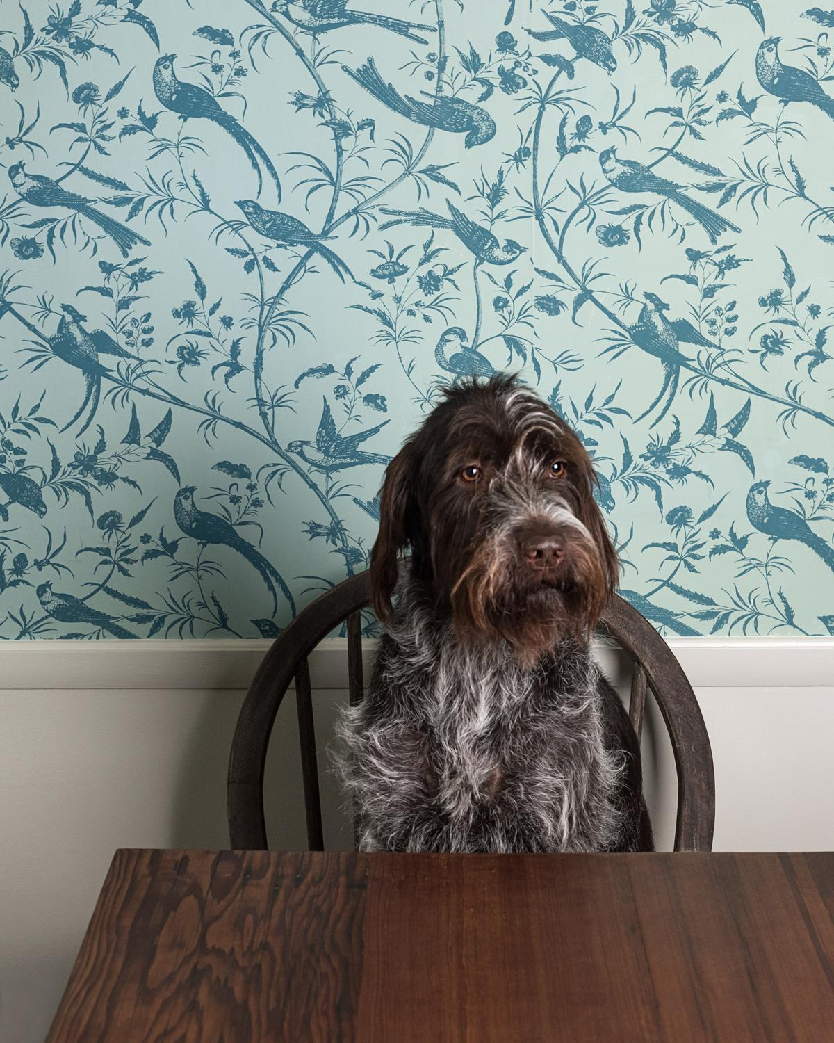 Tobin: Wire-haired Pointing Griffon from Maine. AKA: Tobs, Magobs
