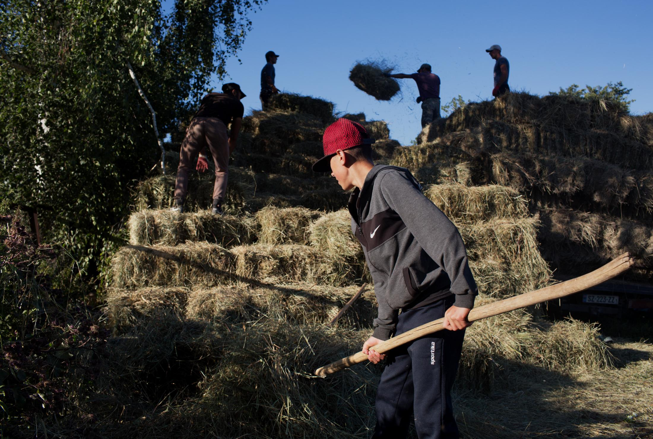 Georgian Christian teens pile bales of hay to be fed to animals during the long winter months.