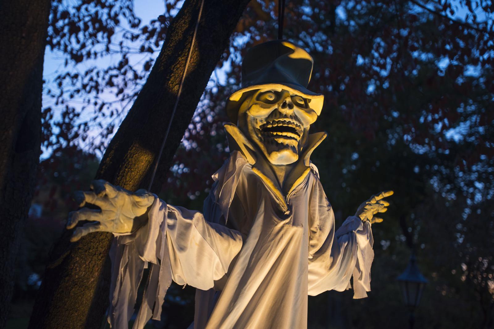 Photography image - Loading Halloween_DSC0773_C.jpg