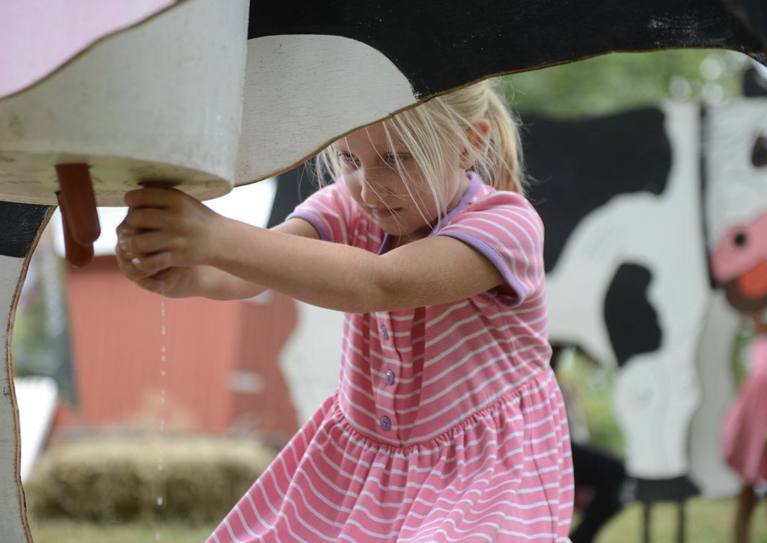 "Katarina Weidinger, 6, ""milks"" a model cow at the Heritage Festival and Craft Show on Sept. 21, 2019 in Columbia, Missouri. Weidinger attended the festival with her mom and siblings"