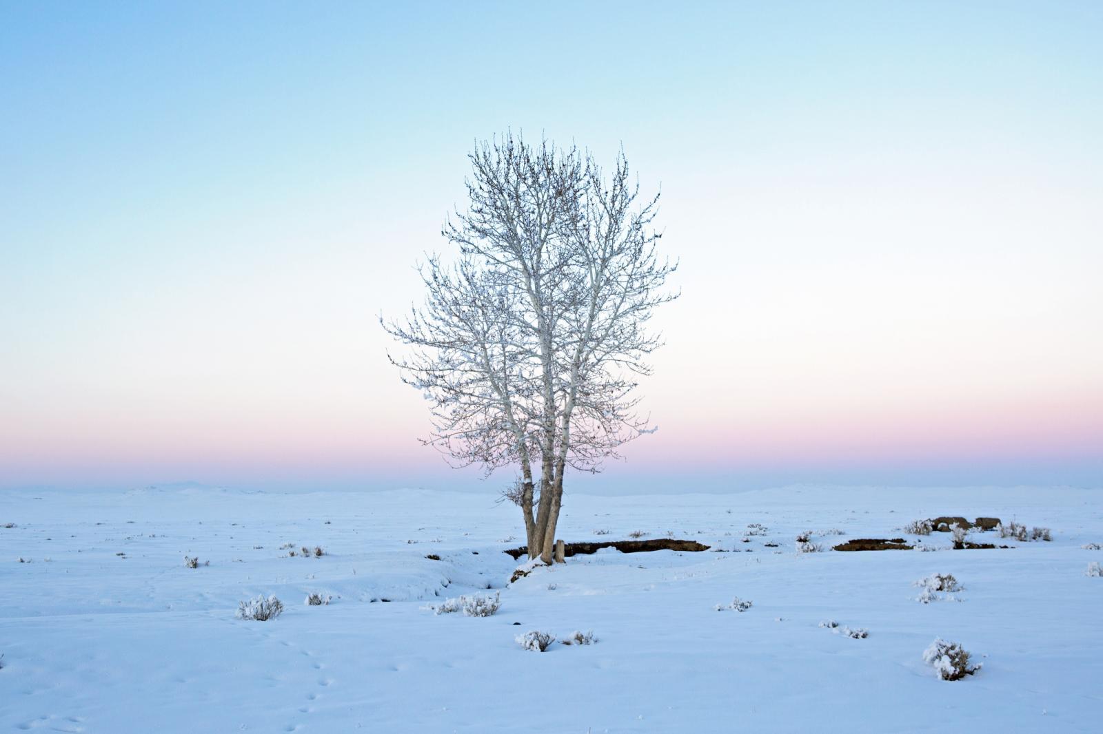 Photography image - Loading Mongolia_For_Website-001.JPG