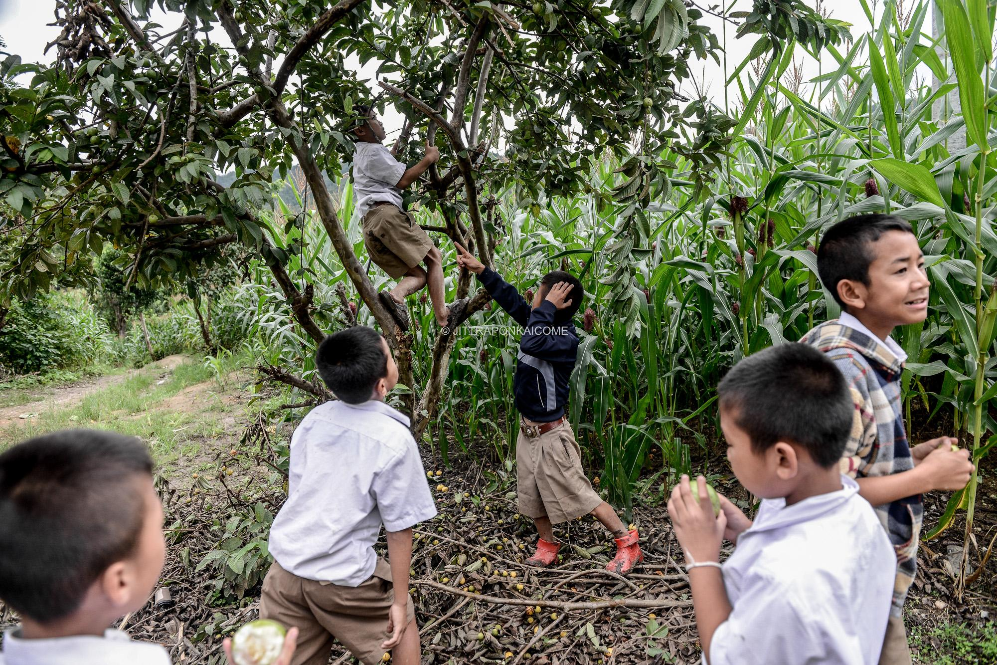 Kids are playing in the cornfields of the mountainous areas at Mae Chaem, Chiang Mai. Their family's income is mainly sourced from growing corn used for the animal feed business. Planting on the mountain slopes starts from June.