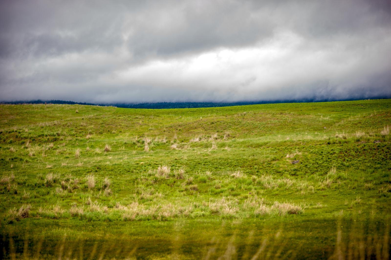 Photography image - Loading florafaunamineralia-3.jpg