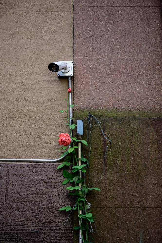 Photography image - Loading things-2.jpg