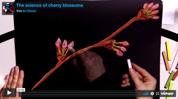 The science of cherry blossoms