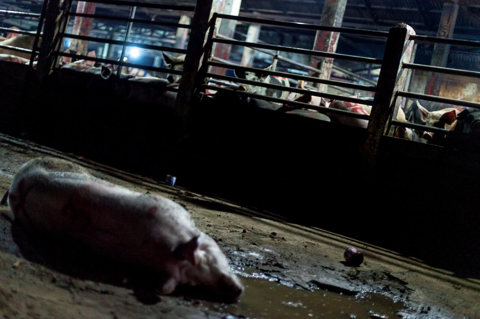 Photography image - Loading 002_Slaughterhouse-Cambodia-Omar-Havana.jpg