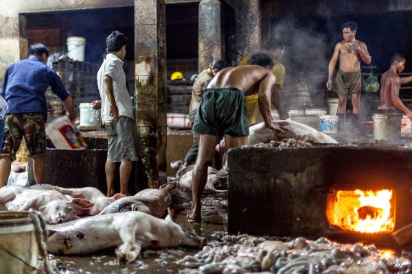 Inside a Cambodian Slaughterhouse