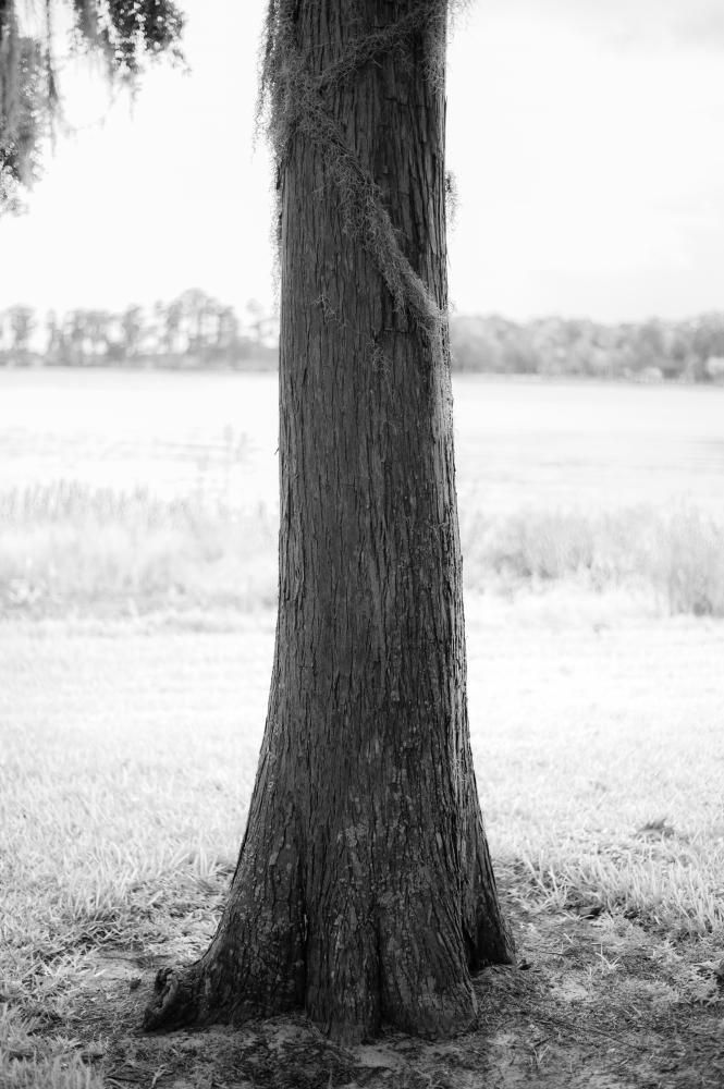Photography image - Loading Edgewater-13.jpg