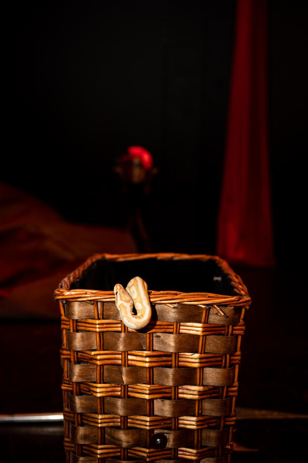 Gatsby, a two-year-old albino python rests in a basket, while magician Elizabeth Gonzales, aka Liz del Sol, rehearses for her show at the Ruby Theater in Hollywood.