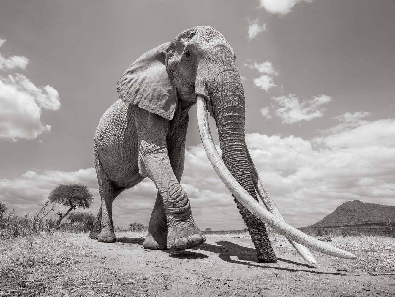 Photography image - Loading land-of-giants-2.jpg