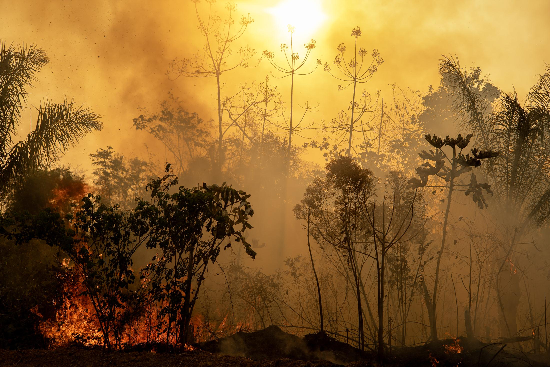 Burning Amazon rainforest area.