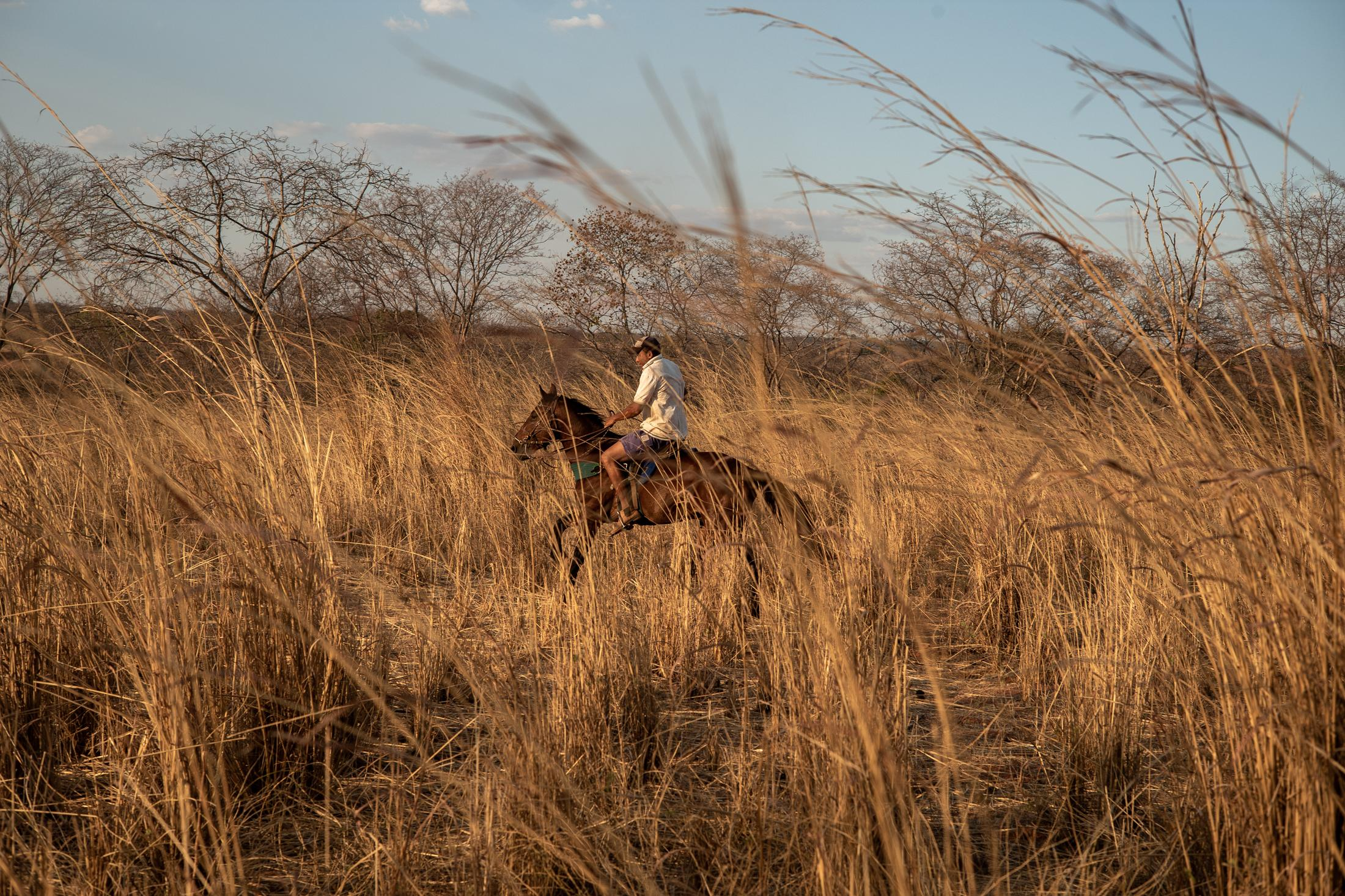Edvar Tavares Rodrigues. In southern Piaui (Brazil), bordering the states of Tocantins and Bahia, deforestation and intensive agriculture have led a region to become a great desert. And that advances with speed.