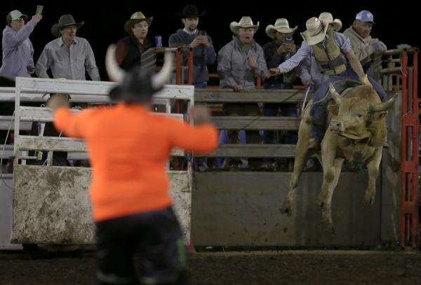 Rodeo clown Jason Lewis dances as Wyatt Smith is launched out of the chute during the Double B Rough Stock Association rodeo in Tipton, MO on Saturday, October 12, 2019.