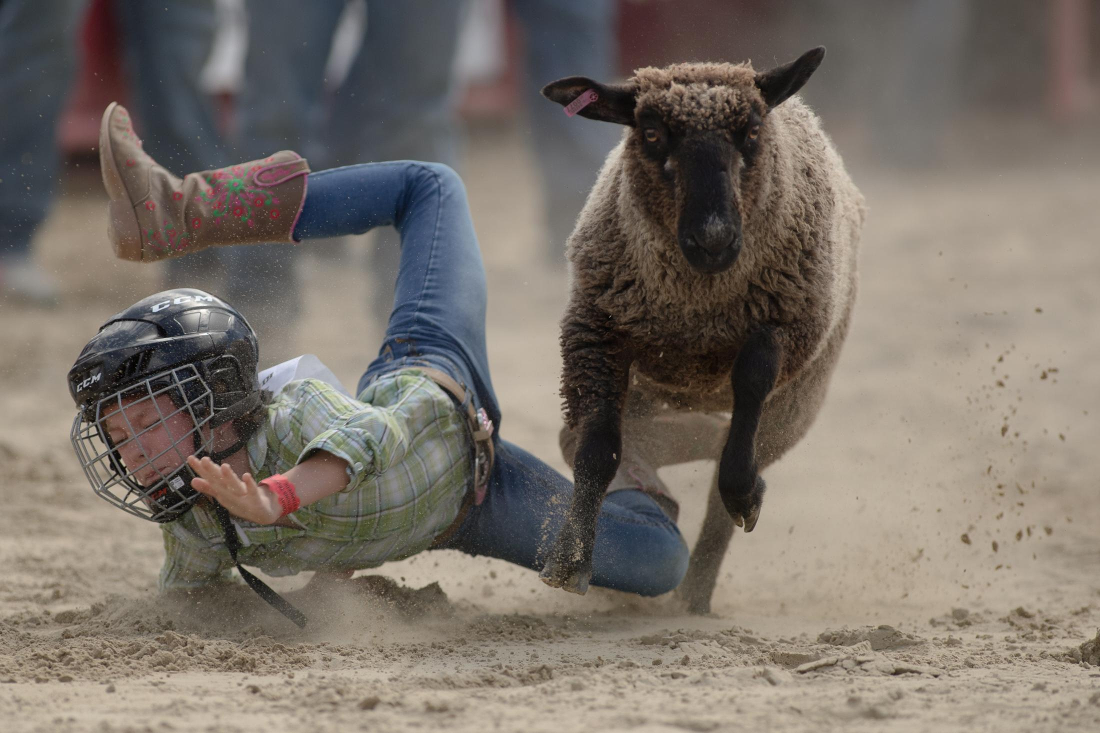 Brooke Stokes from Southbury, CT gets thrown off a sheep but takes first place in the youth division at the mutton busting competition at the Goshen Stampede in Goshen, CT on June 15, 2019.