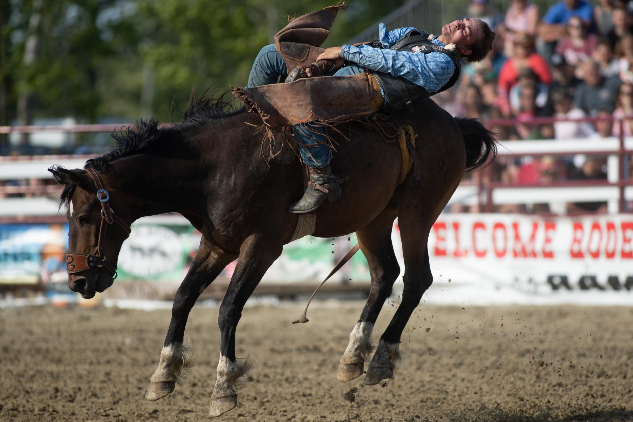 Eli Hershberger from Pifford, New York opens the PRCA rodeo at the Goshen Stampede in Goshen, CT in the bareback horse riding competition on June 15, 2019.