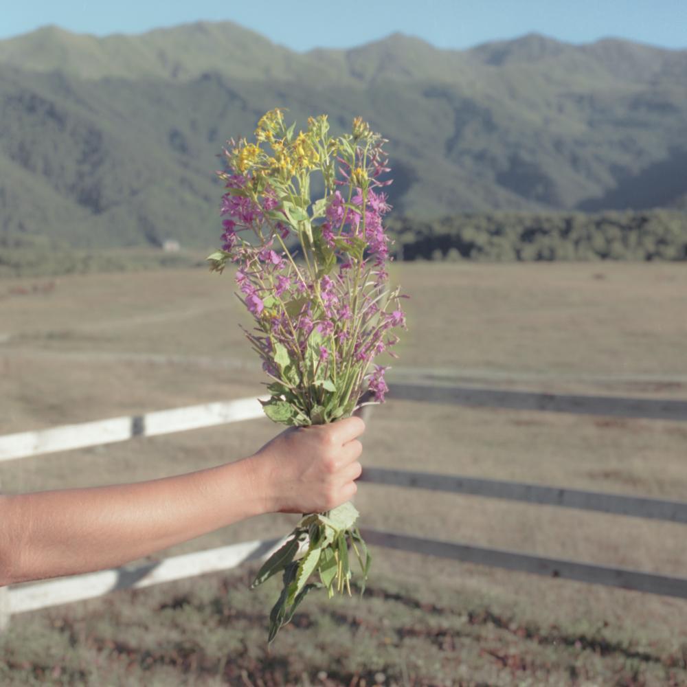 Senecio grandidentatus, Epilobium angustifolium As summer ascended, The flowers I gave you   grew wings     And flew away.