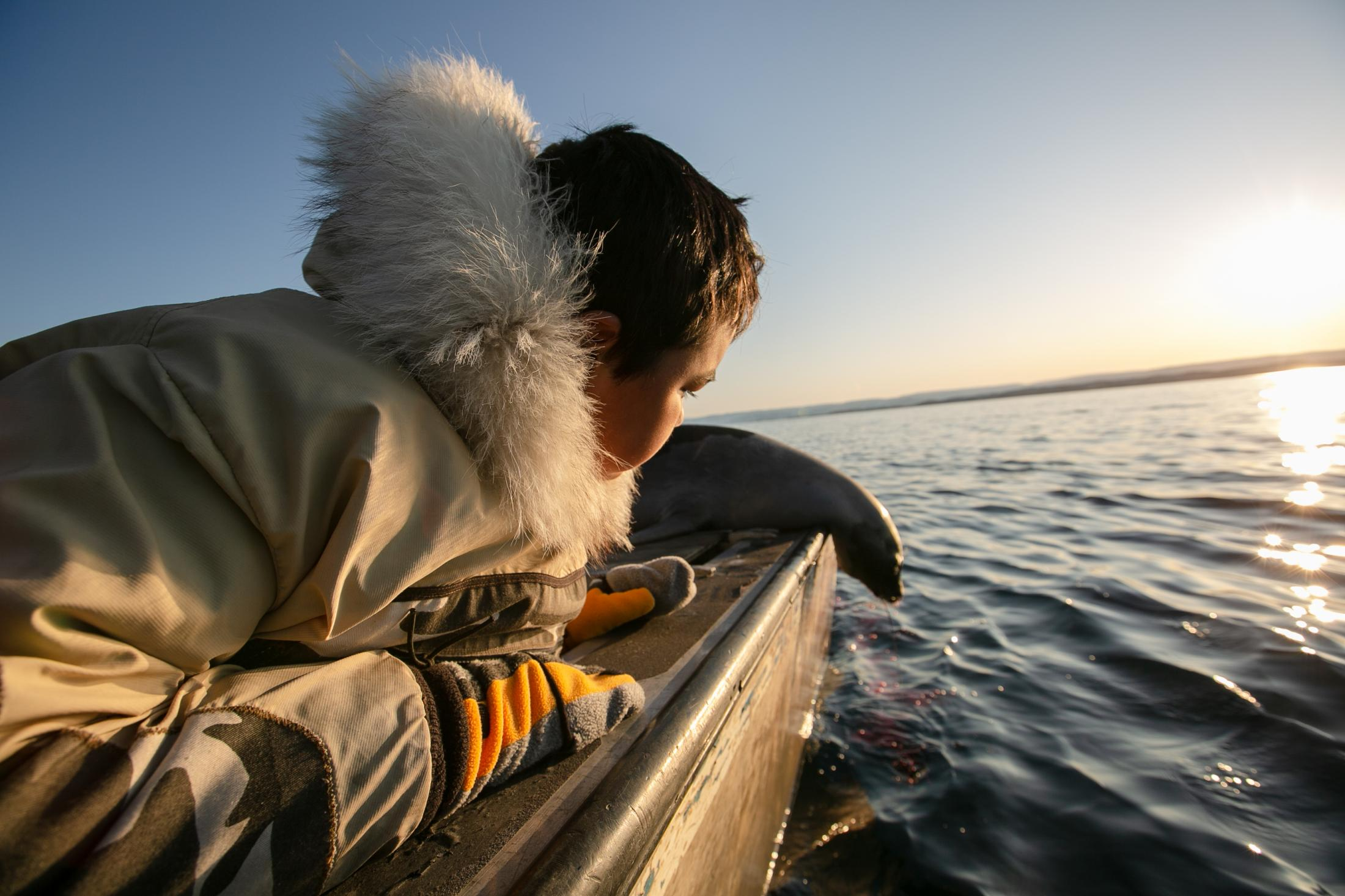 Kaniq Allerton has a close look at a recently killed harp seal during a hunt in October.