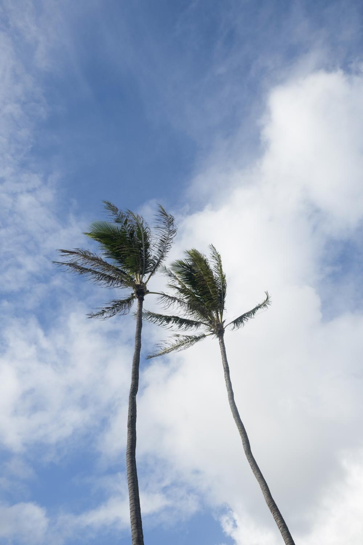 Kapa'a, Hawaii.
