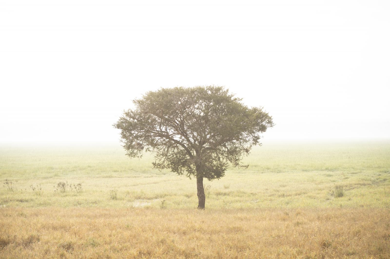 Photography image - Loading Tree.jpg