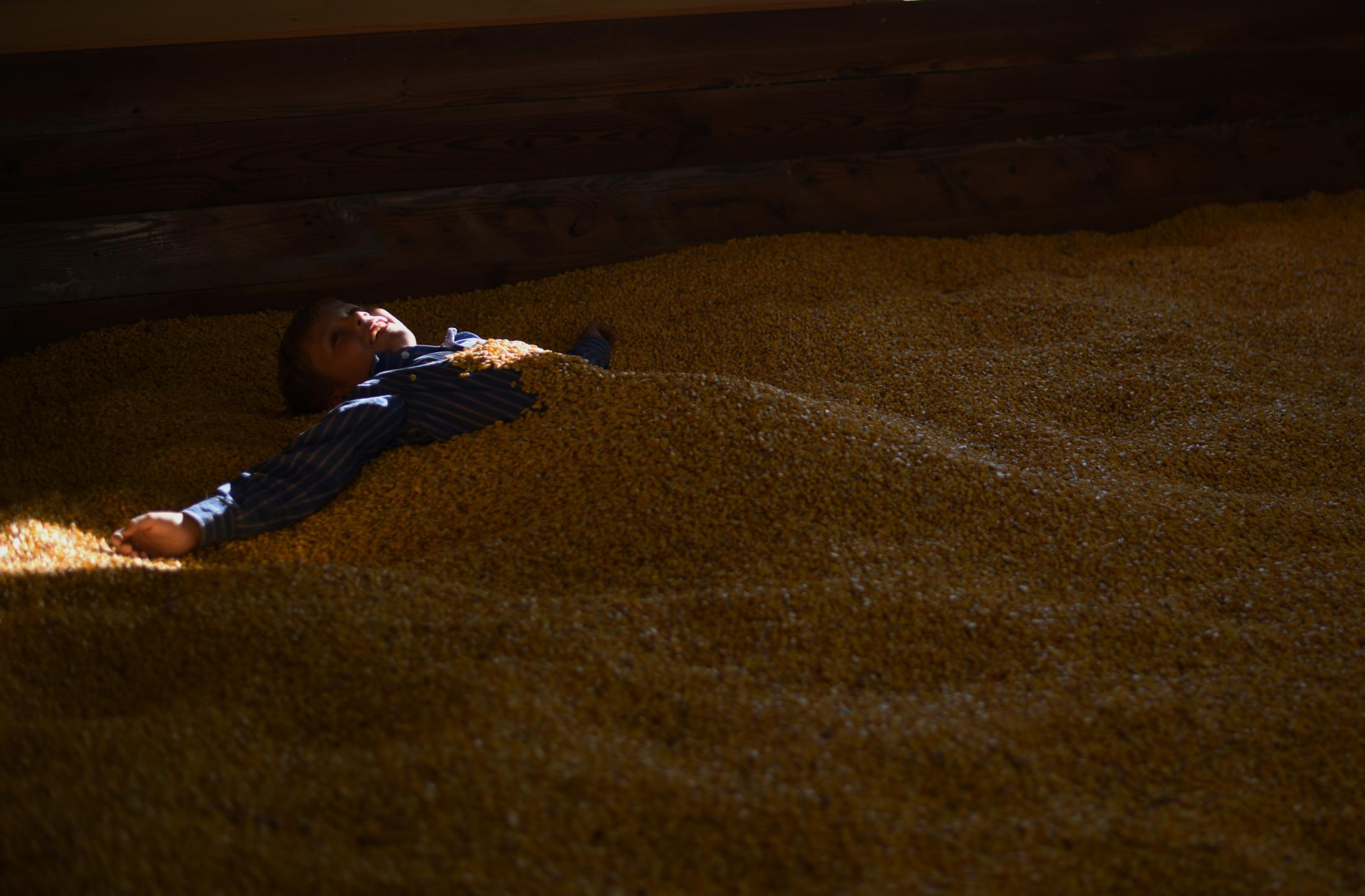 Zeke Lyons, 9, lies in a pit of corn at Shryocks corn maze Oct. 13, 2019 outside Columbia, Missouri. He and his family visited Shryocks in 2018 and decided to return for another year.