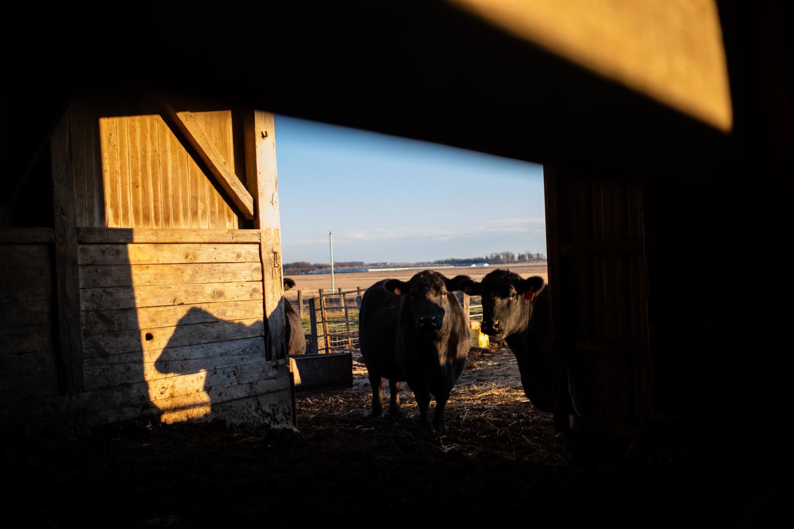 Golden hour on my family's farm in Schaller, Iowa.