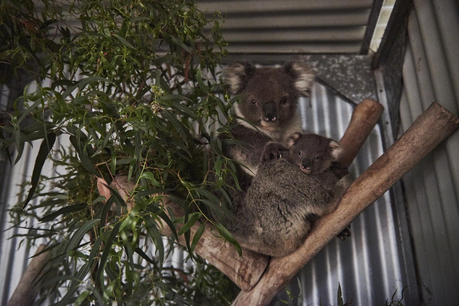 Photography image - Loading Oz-animals-0366.jpg
