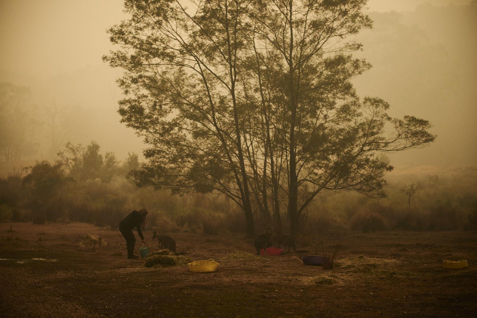 Photography image - Loading Oz-animals-1424.jpg