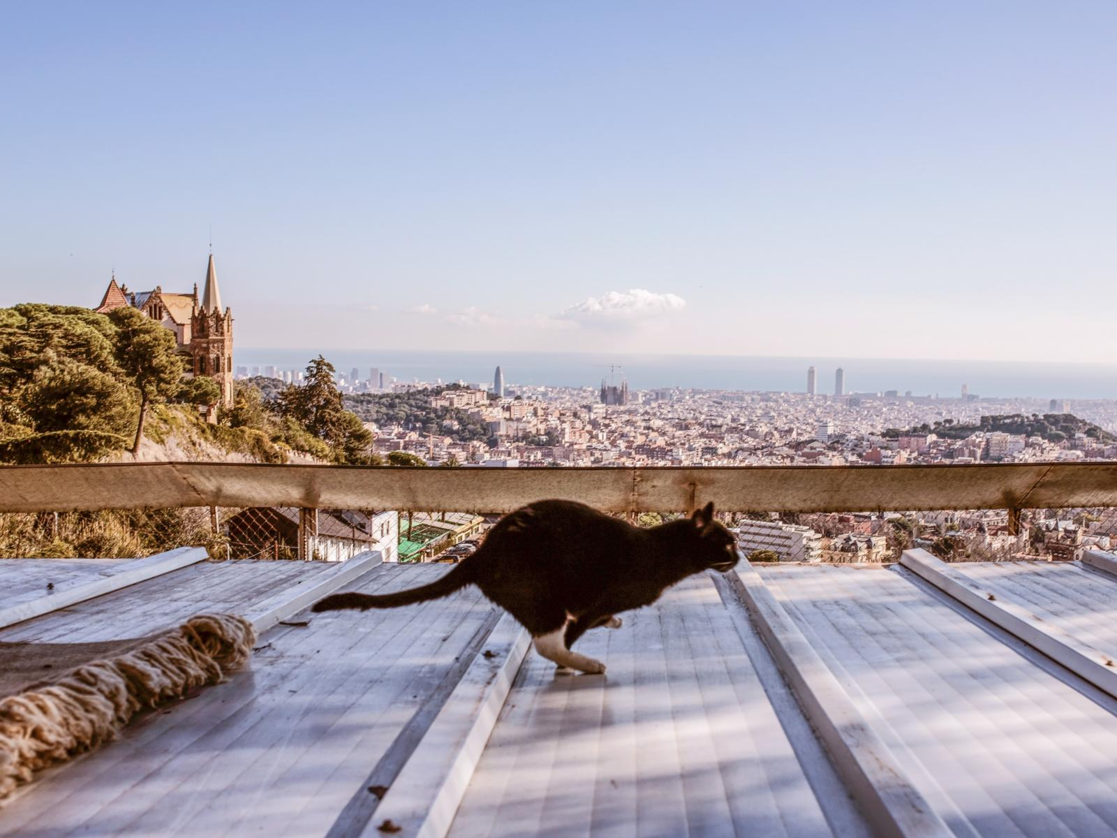 Anihuman being, Barcelona, Spain 2017-2018