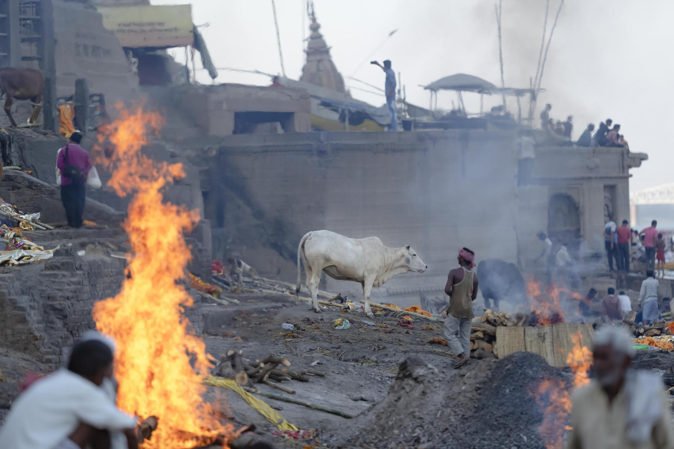 A cow stands still around cremated bodies on Manikarnika Ghat in Varanasi.