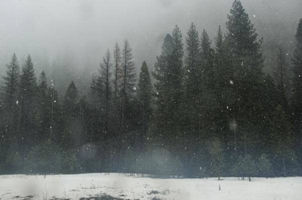 The first snow of winter in the valley of Yosemite National Park, California.