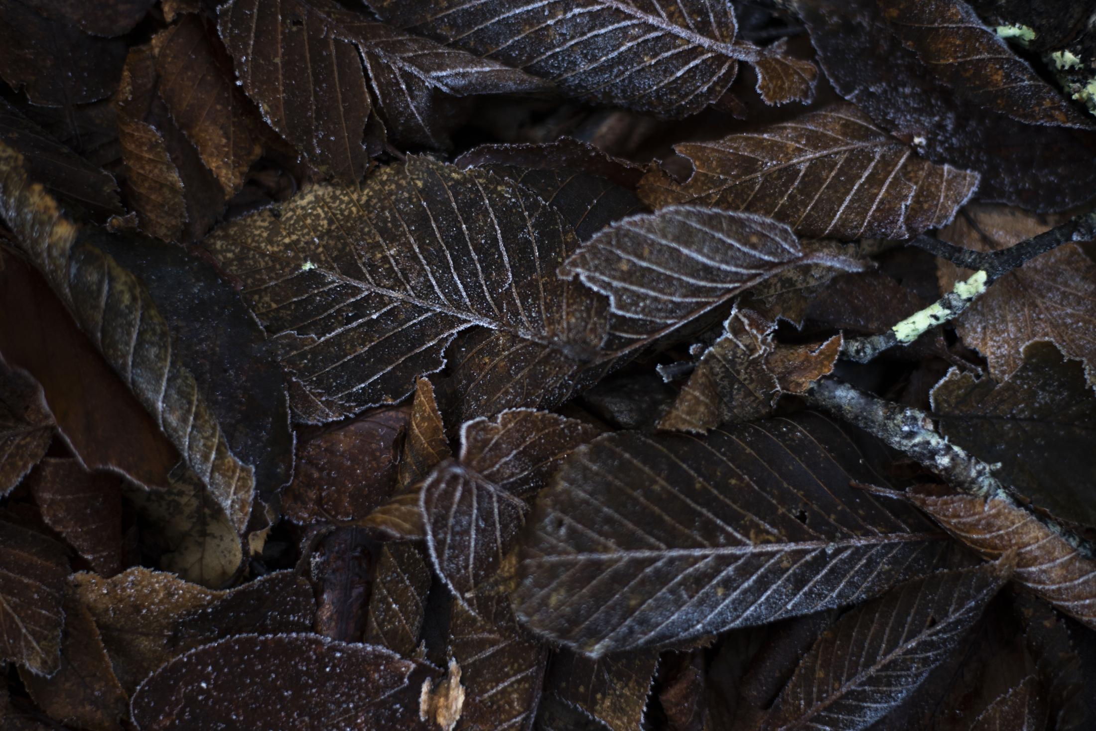 Frost highlights fallen leaves in Great Smoky Mountains National Park on Nov. 18, 2018 in Tennessee.