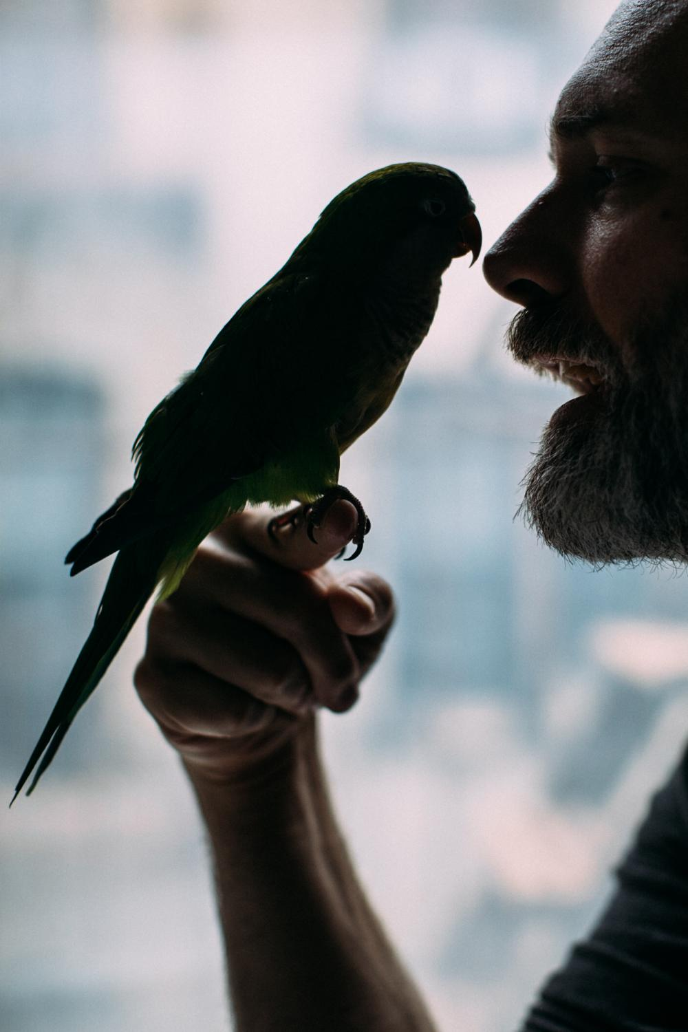 Justin Marshall and his vibrant green male Quaker Parrot, Chicken, for The New York Times