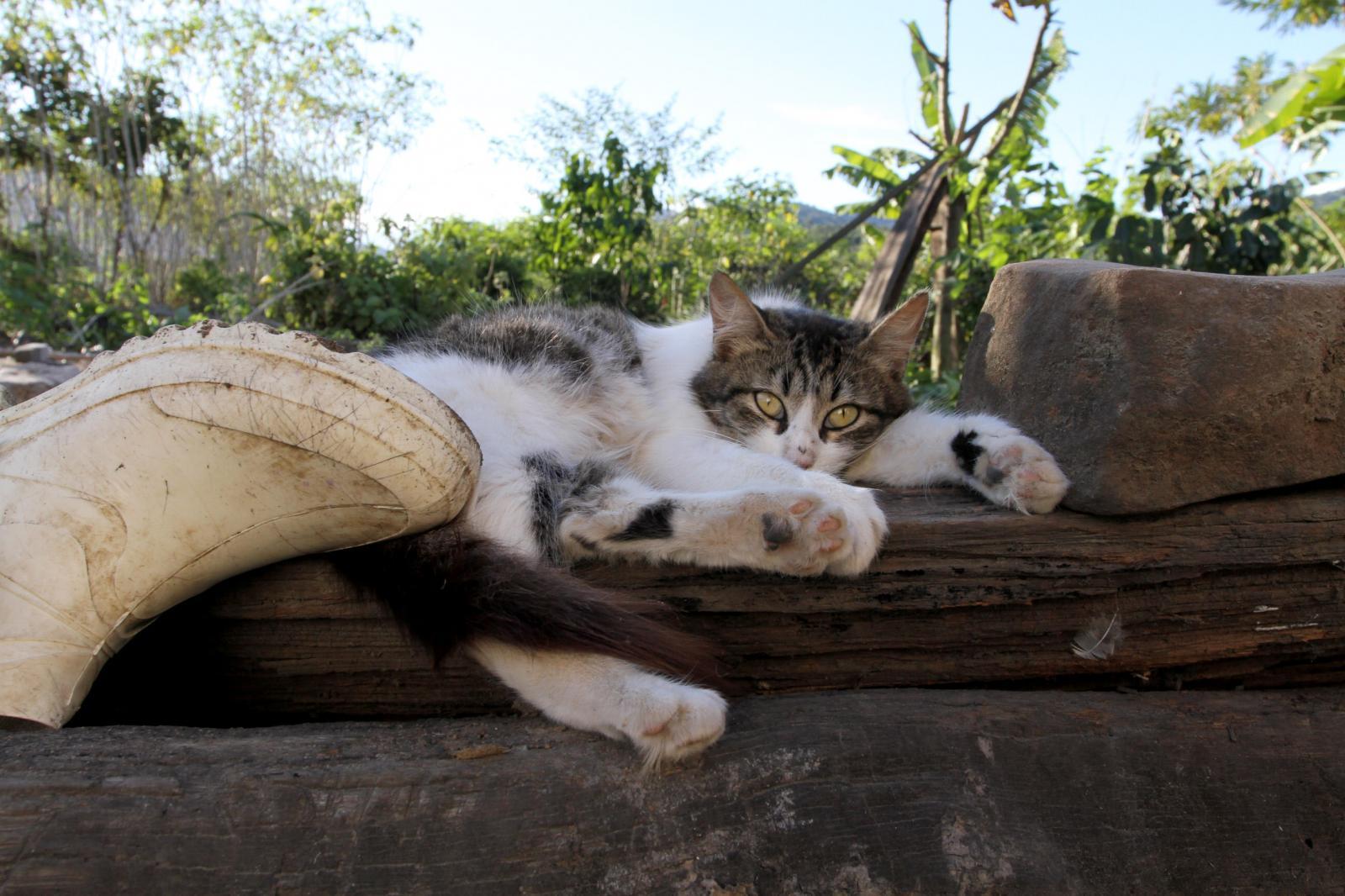 The village cat sleeps as the Pataxós HãHãHãe's pray.