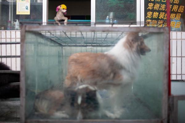 Kuerla, China [2008 Katie Hayes]