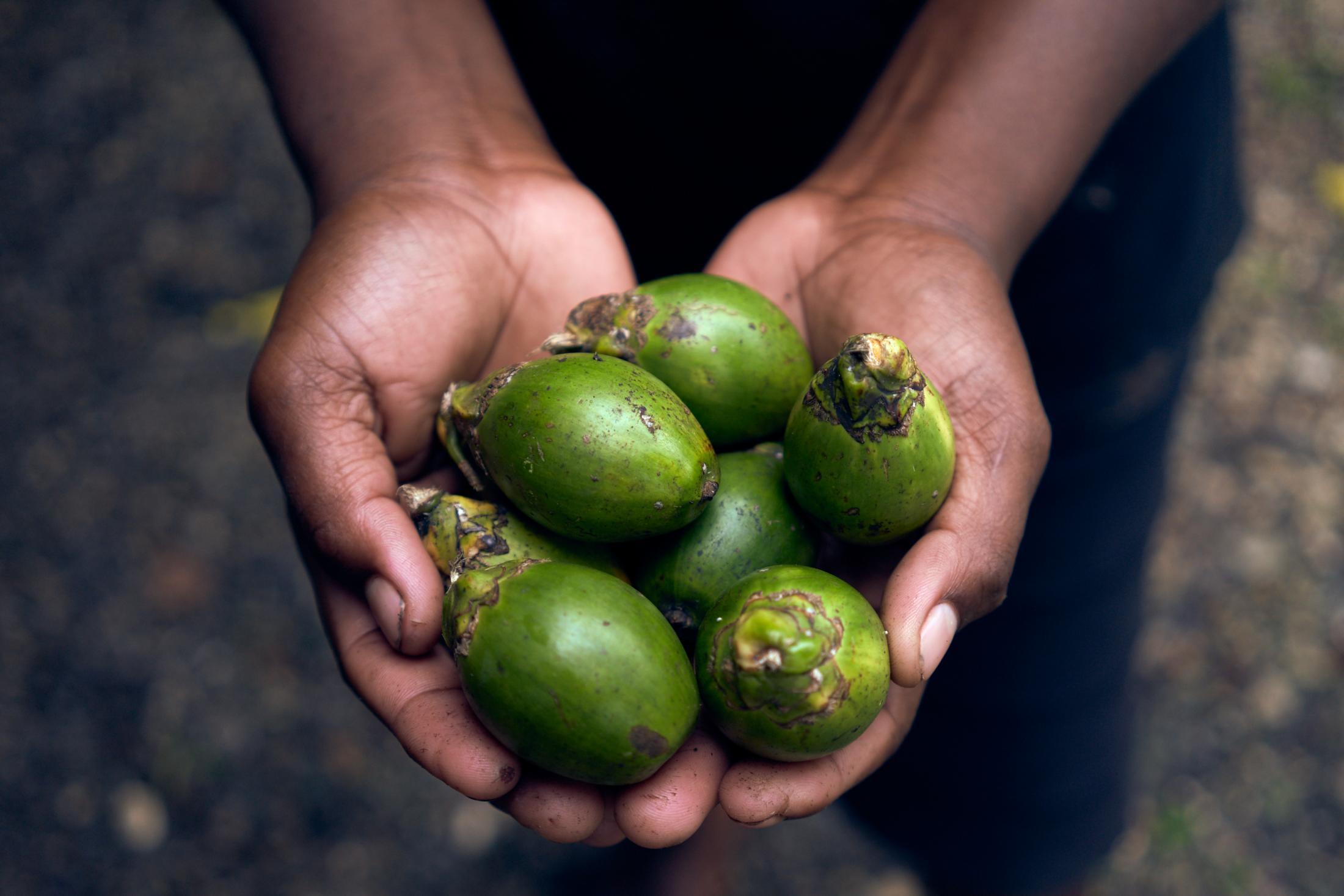 A betel nut vendor shows her goods at Auki central market. Malaita, Solomon Islands.