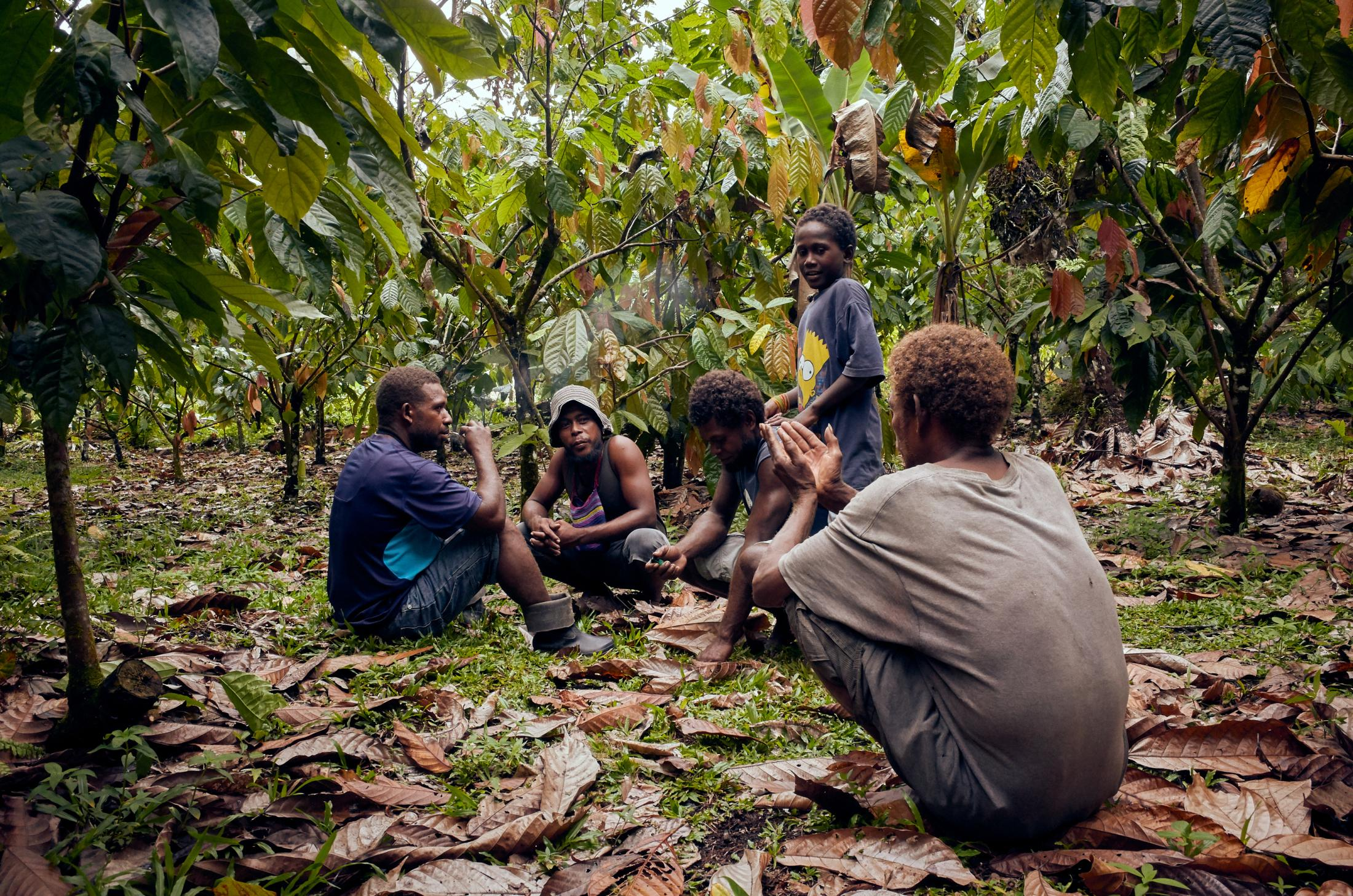 A group of cocoa farmers take a rest from work in the West Baeleta region of Malaita, Solomon Islands.