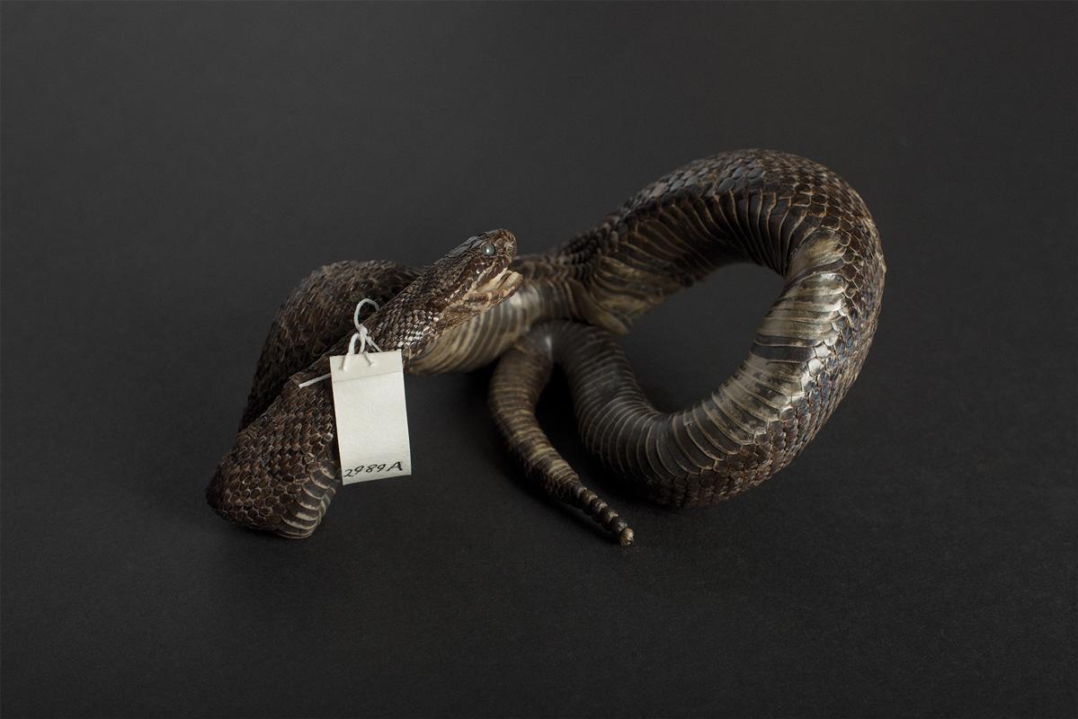 Photography image - Loading 8-helen_snake_WEB.jpg