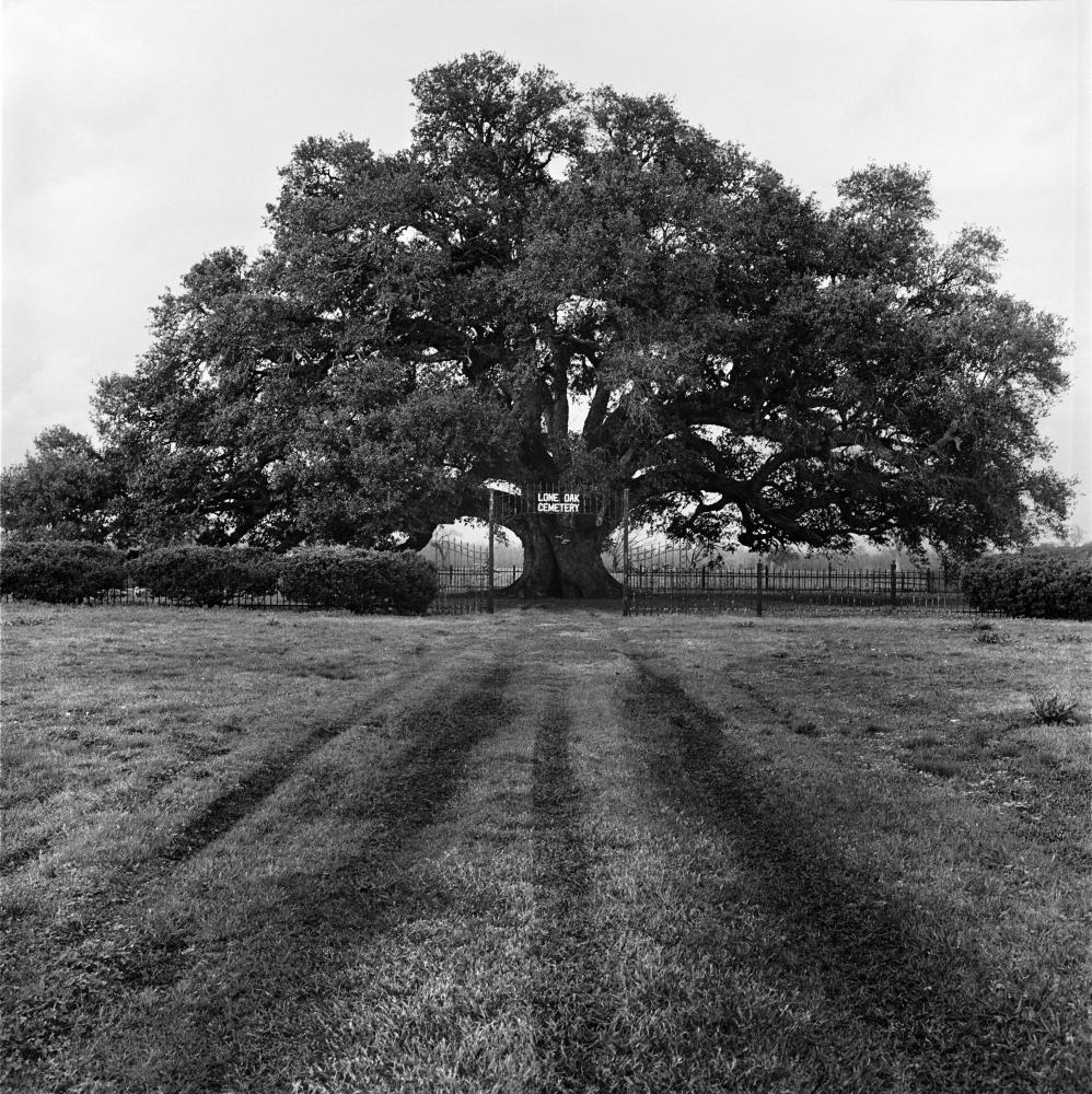 Photography image - Loading loneoak(carville)2edit1.jpg