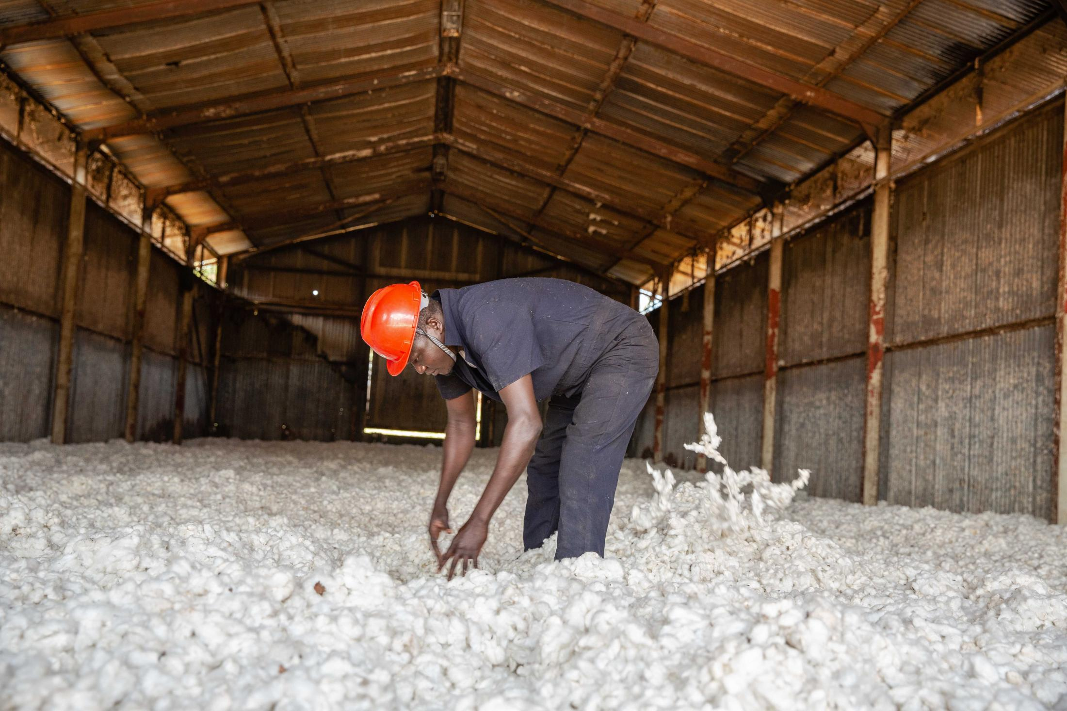 Steve G, an employee at Gulu Agricultural Development Association sifts through the cotton as it's kept to dry in a warehouse before processing. For Caritas International.