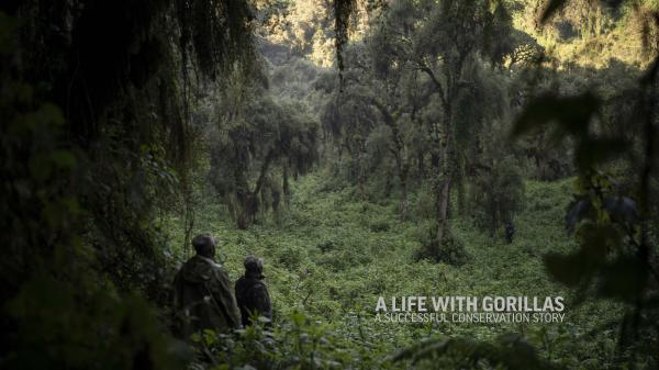A Life With Gorillas