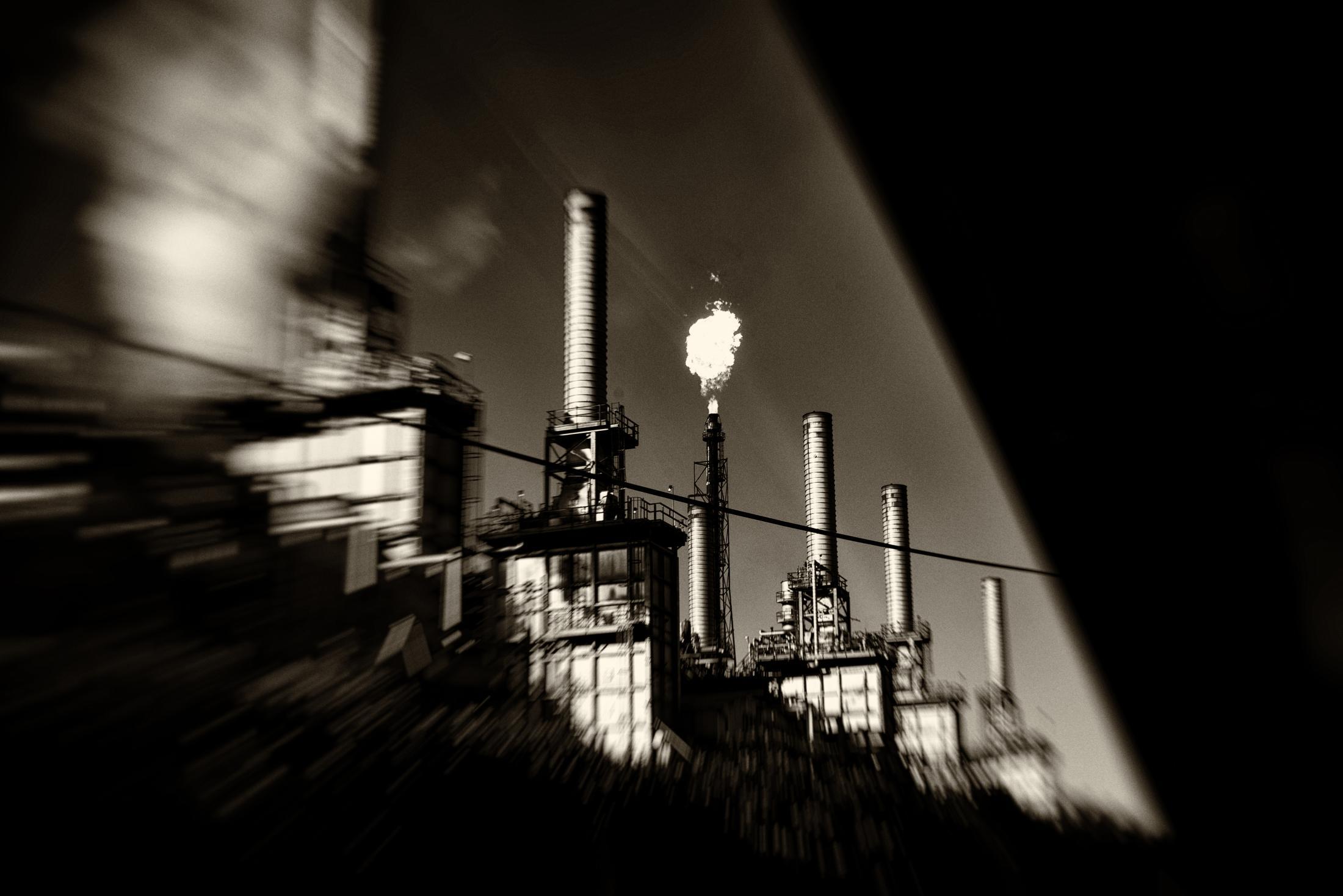 Art and Documentary Photography - Loading yellowhead_2_DSC1034.jpg