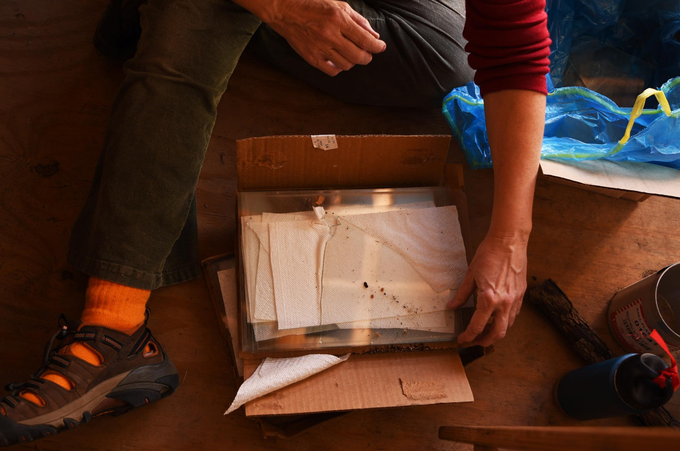 """Margaret Waddell sifts through a box of glass as she cleans out the shed on her land at Crystal Lake on Nov. 2, 2019. Waddell built the shed herself to store various supplies and a collection of remnants from the original cabin including glass, melted plates, and windows. """"I want to incorporate these relics into my life as much as I can,"""" Waddell said."""