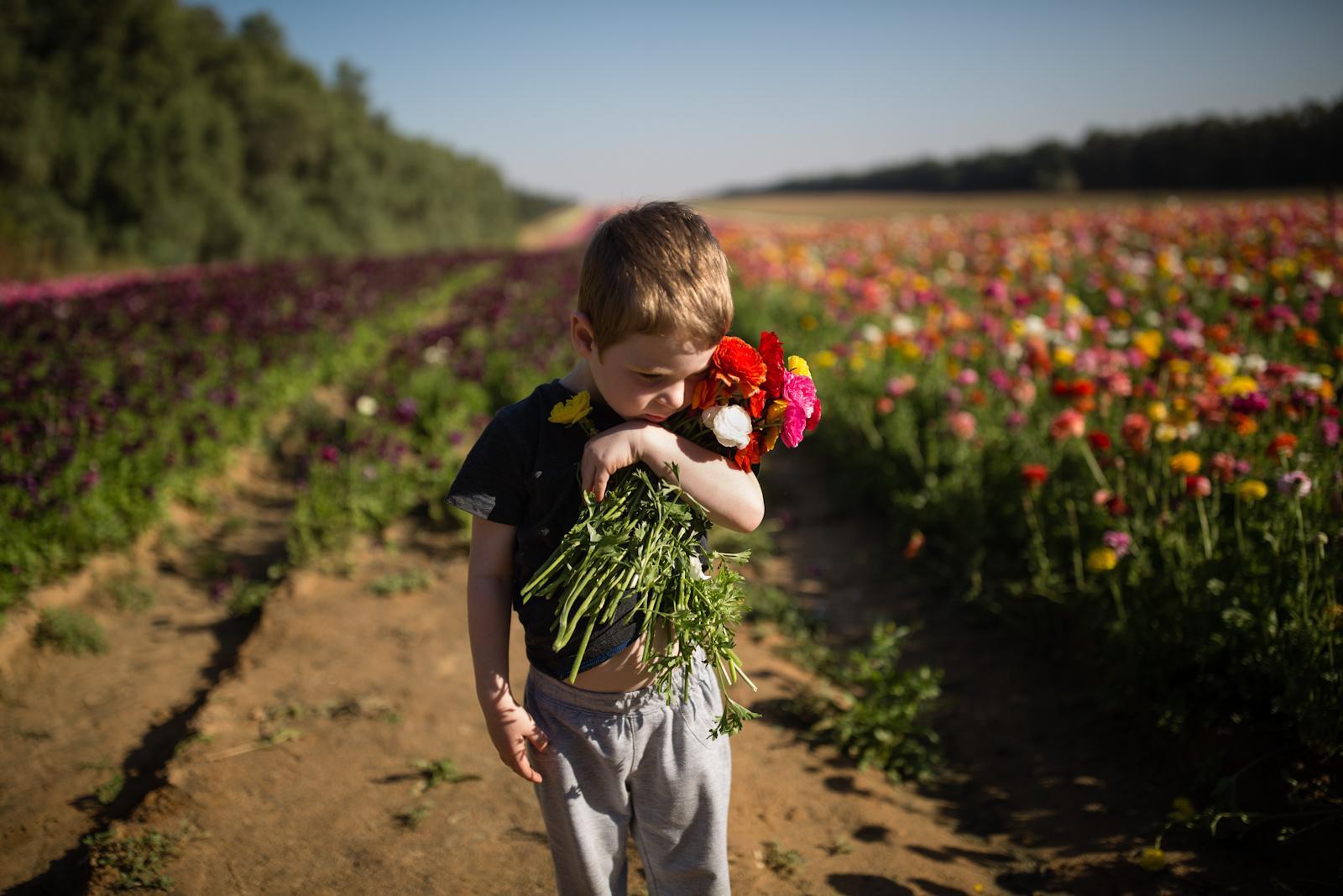 NIR YITZHAK, ISRAEL - APRIL 18, 2016: An Israeli boy hugs a bundle of flowers in a buttercup field near Kibbutz Nir Yitzhak in southern Israel, just outside the Gaza Strip April 18, 2016.
